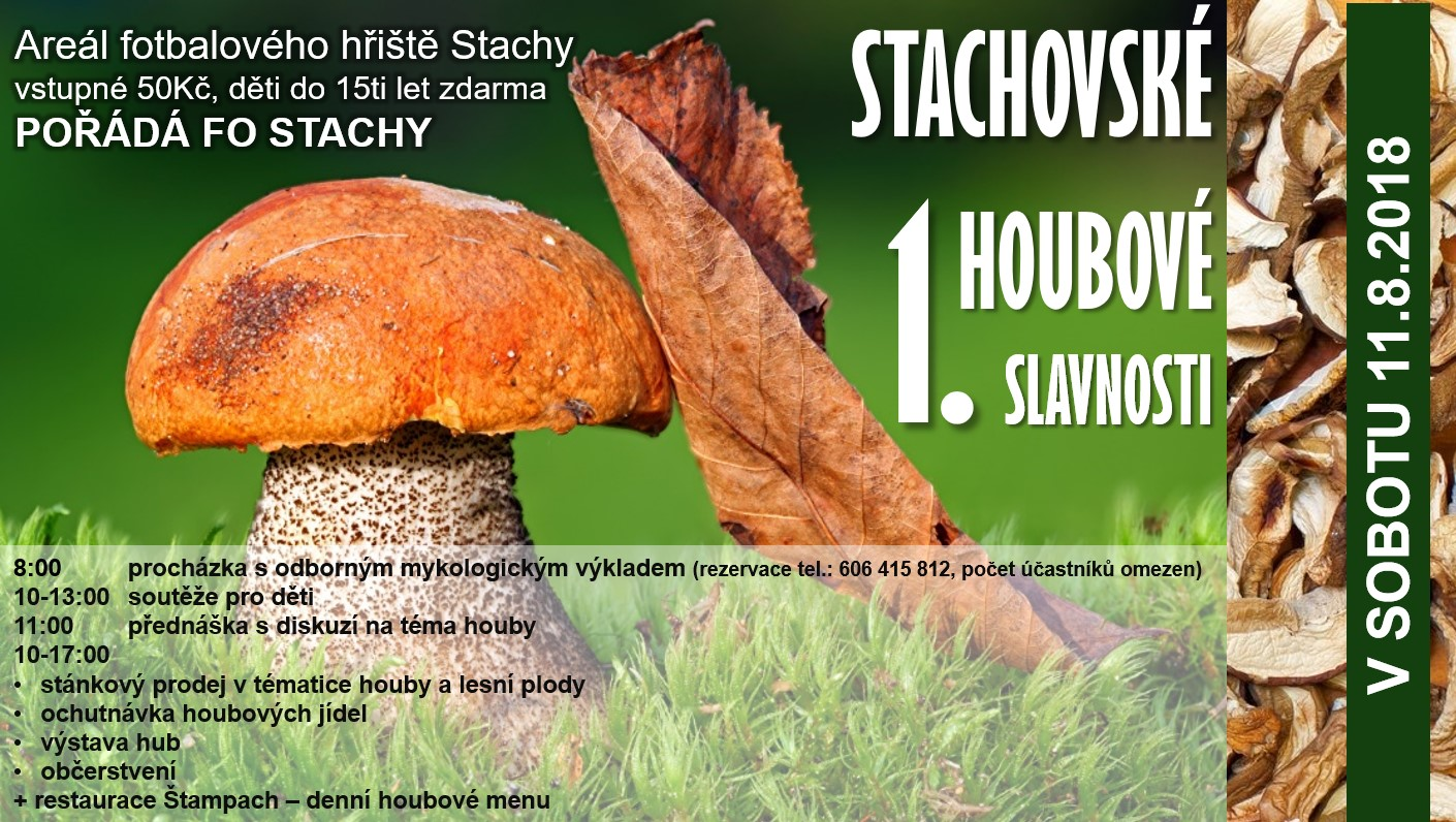 11.8. stachy